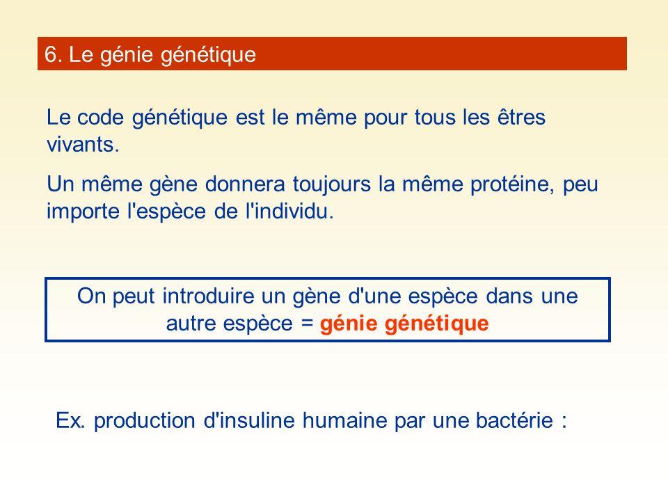 6. Le génie génétique Le code génétique est le même pour tous les êtres vivants.