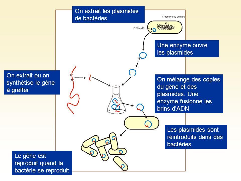 On extrait les plasmides de bactéries