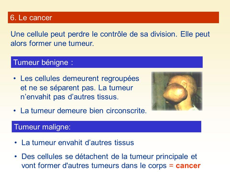 6. Le cancer Une cellule peut perdre le contrôle de sa division. Elle peut alors former une tumeur.
