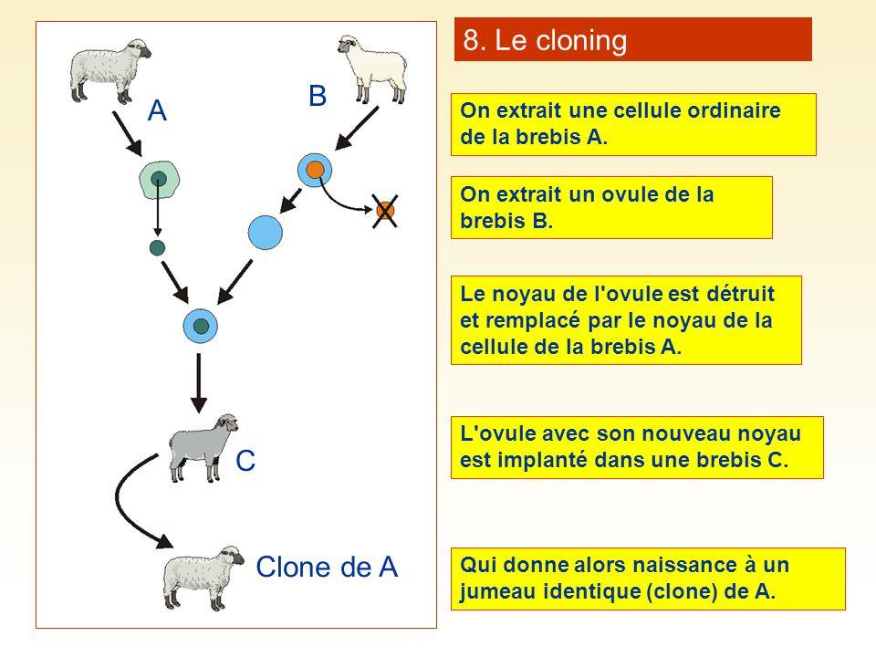8. Le cloning B A C Clone de A