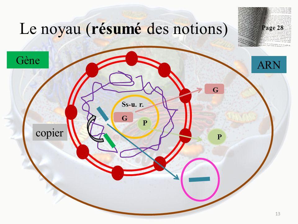 Le noyau (résumé des notions)