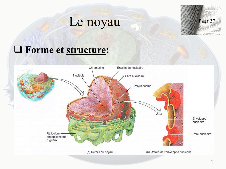 Le noyau Page 27 Forme et structure: