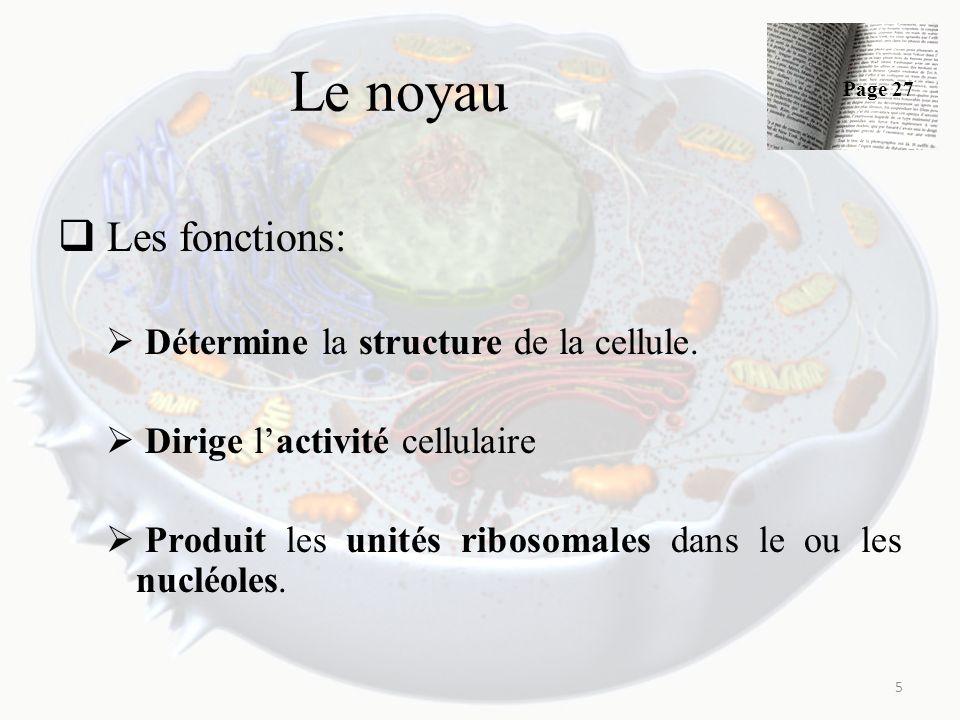 Le noyau Les fonctions: Détermine la structure de la cellule.