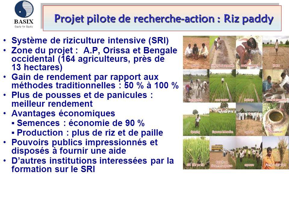 Projet pilote de recherche-action : Riz paddy