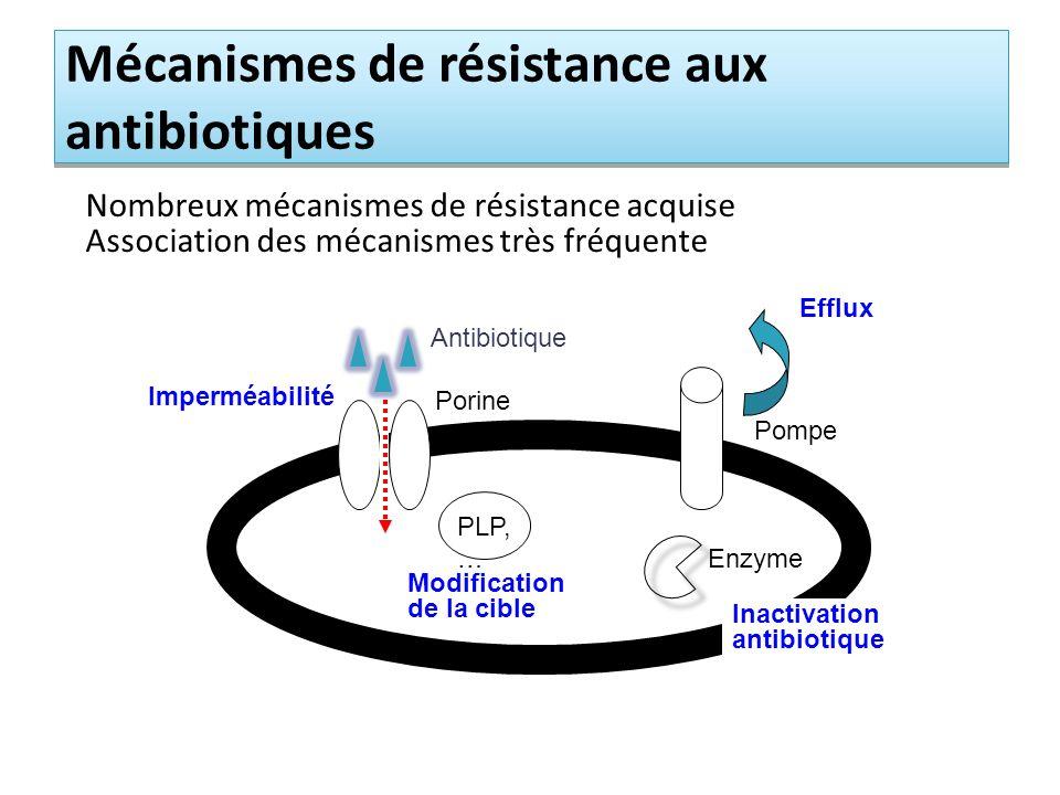 Mécanismes de résistance aux antibiotiques