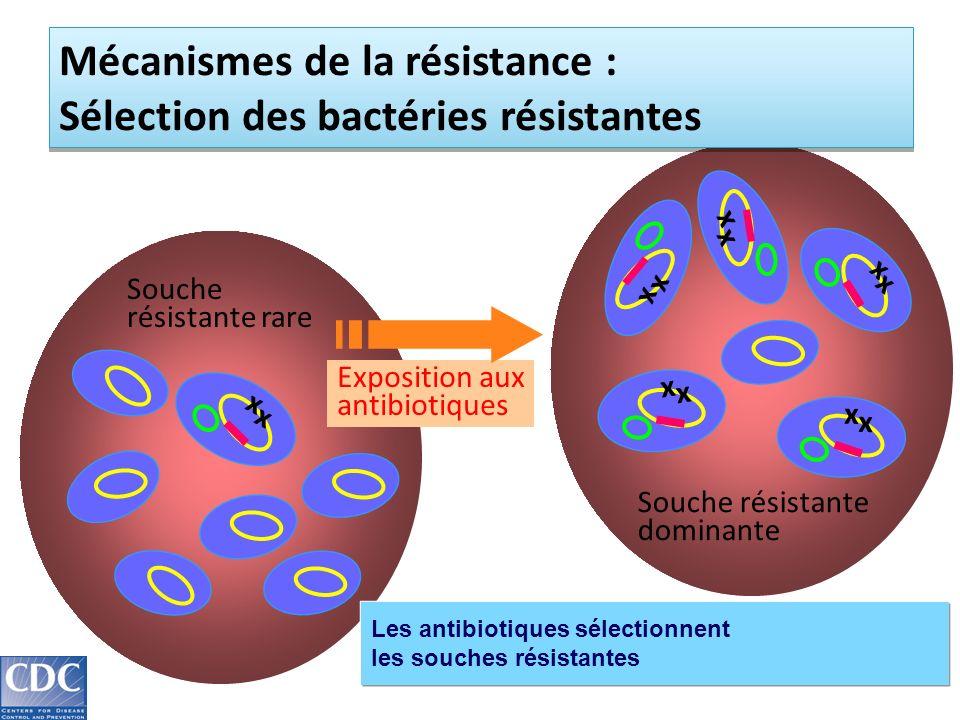 Mécanismes de la résistance : Sélection des bactéries résistantes
