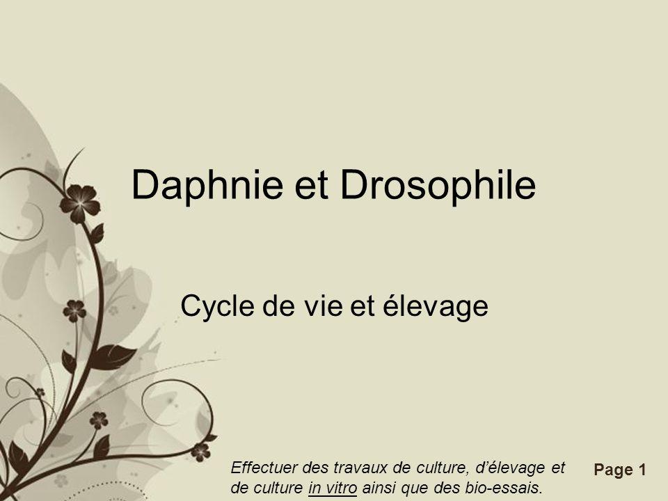 Daphnie et Drosophile Cycle de vie et élevage