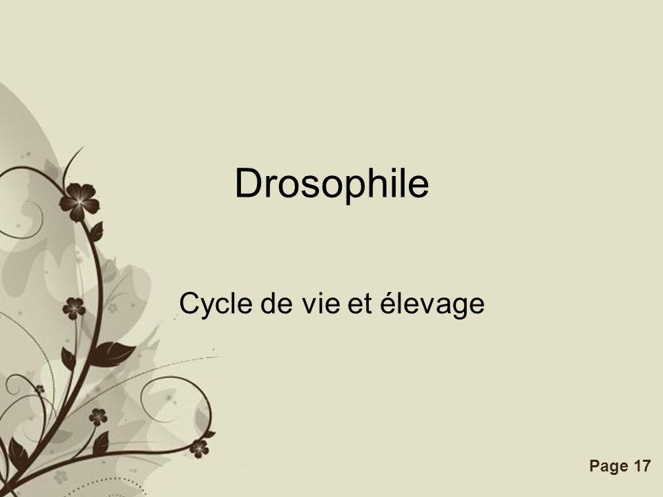 Drosophile Cycle de vie et élevage
