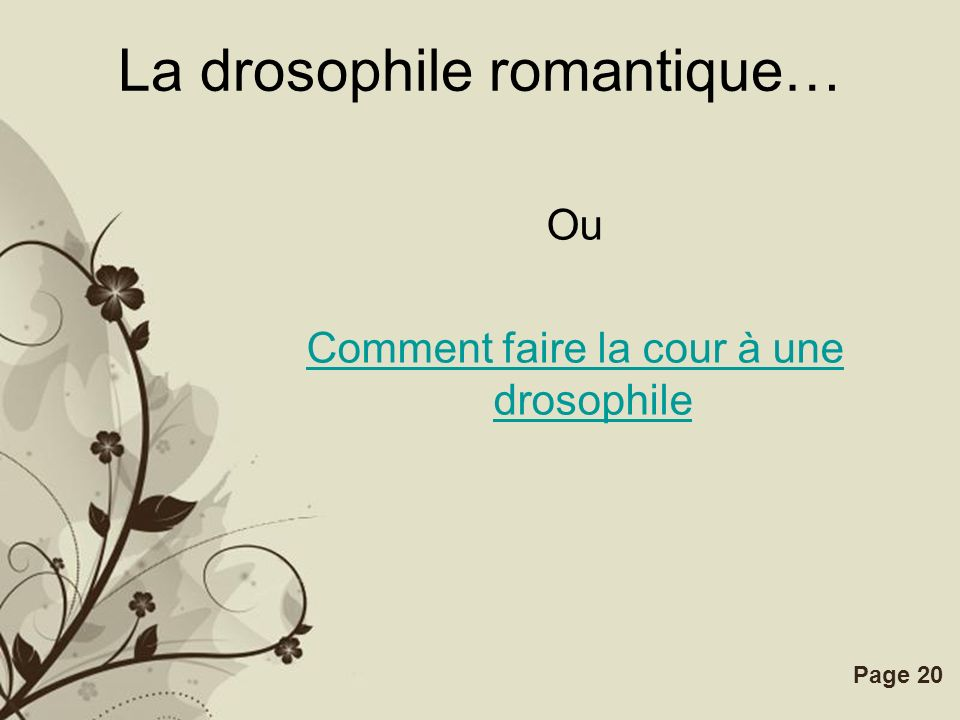 La drosophile romantique…