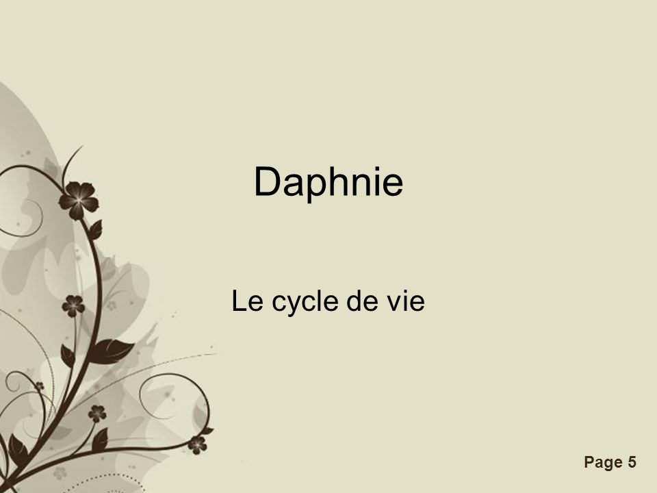 Daphnie Le cycle de vie