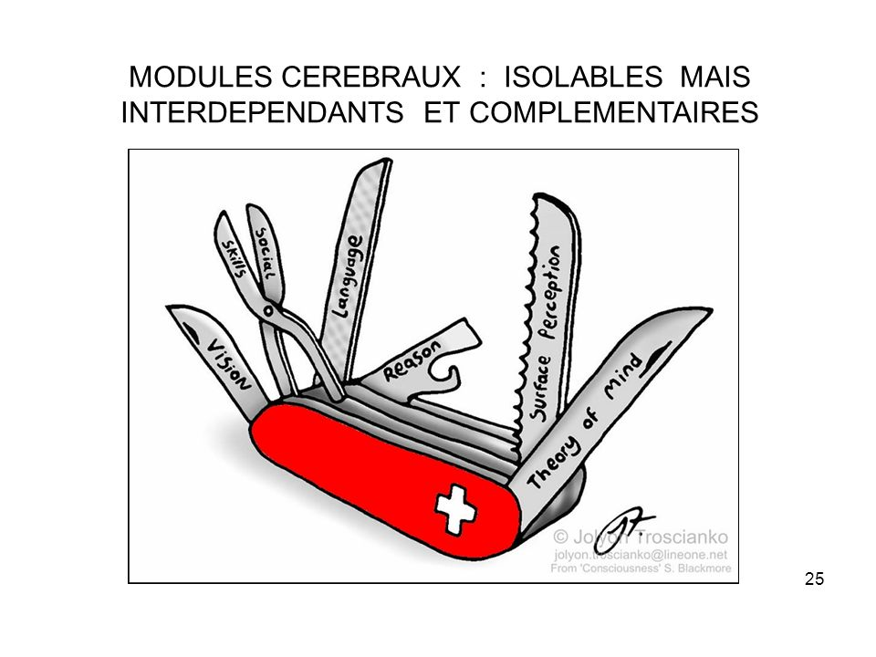 MODULES CEREBRAUX : ISOLABLES MAIS INTERDEPENDANTS ET COMPLEMENTAIRES