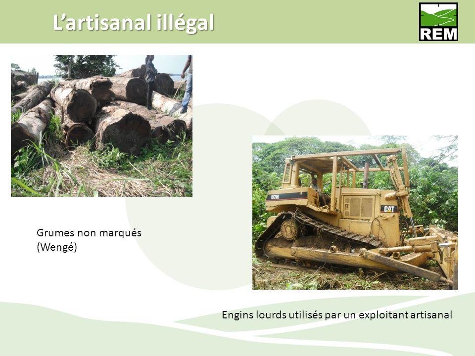 L'artisanal illégal Grumes non marqués (Wengé)