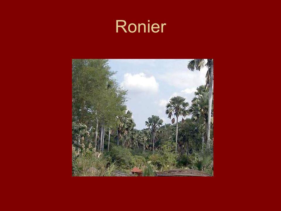 Ronier