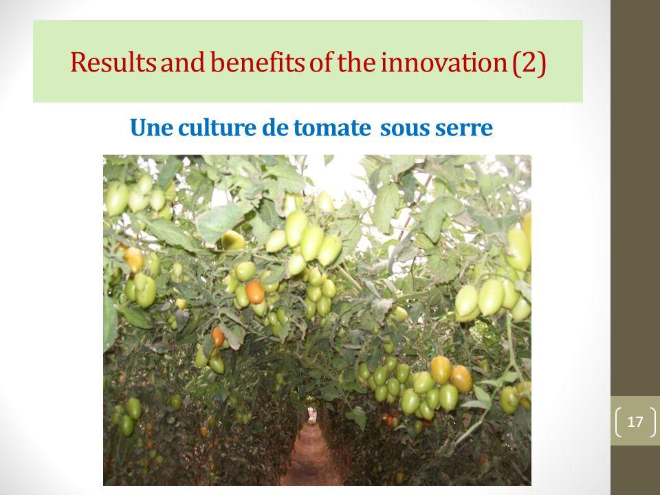 Une culture de tomate sous serre