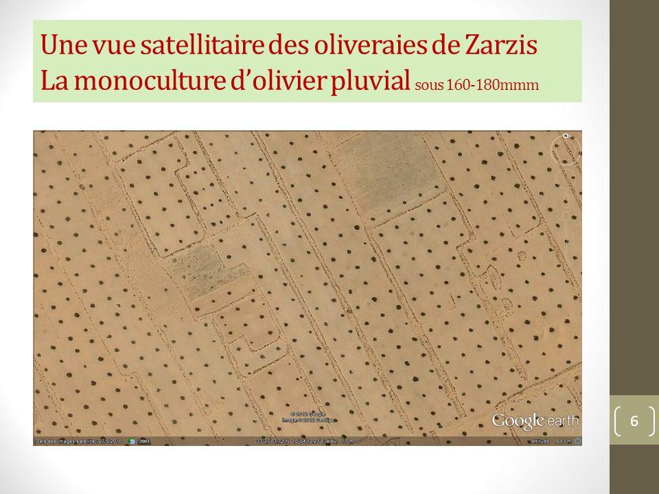 Une vue satellitaire des oliveraies de Zarzis La monoculture d'olivier pluvial sous 160-180mmm