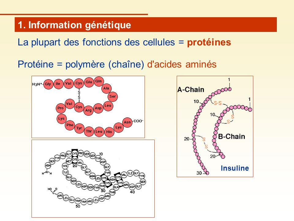 1. Information génétique