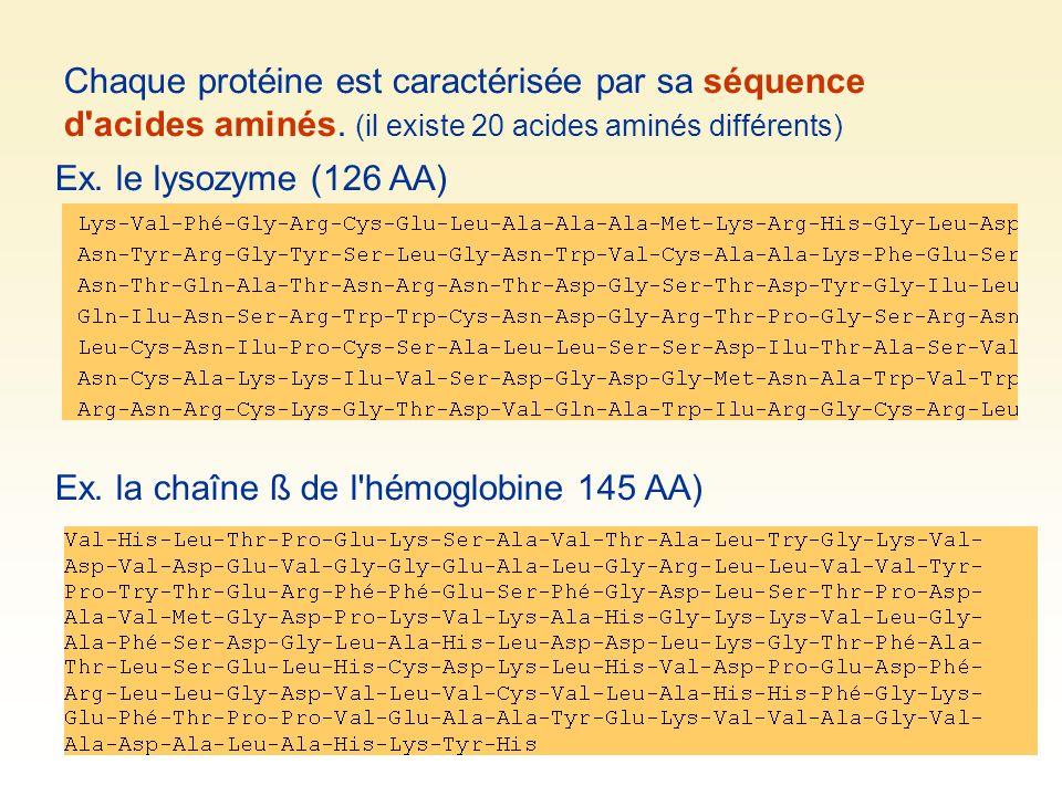 Chaque protéine est caractérisée par sa séquence d acides aminés