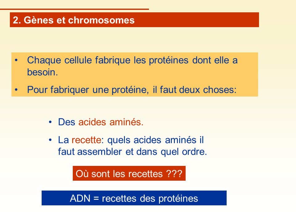 ADN = recettes des protéines