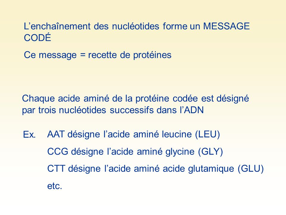 L'enchaînement des nucléotides forme un MESSAGE CODÉ