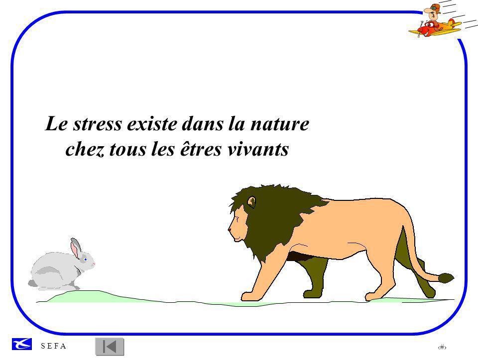 Le stress existe dans la nature chez tous les êtres vivants