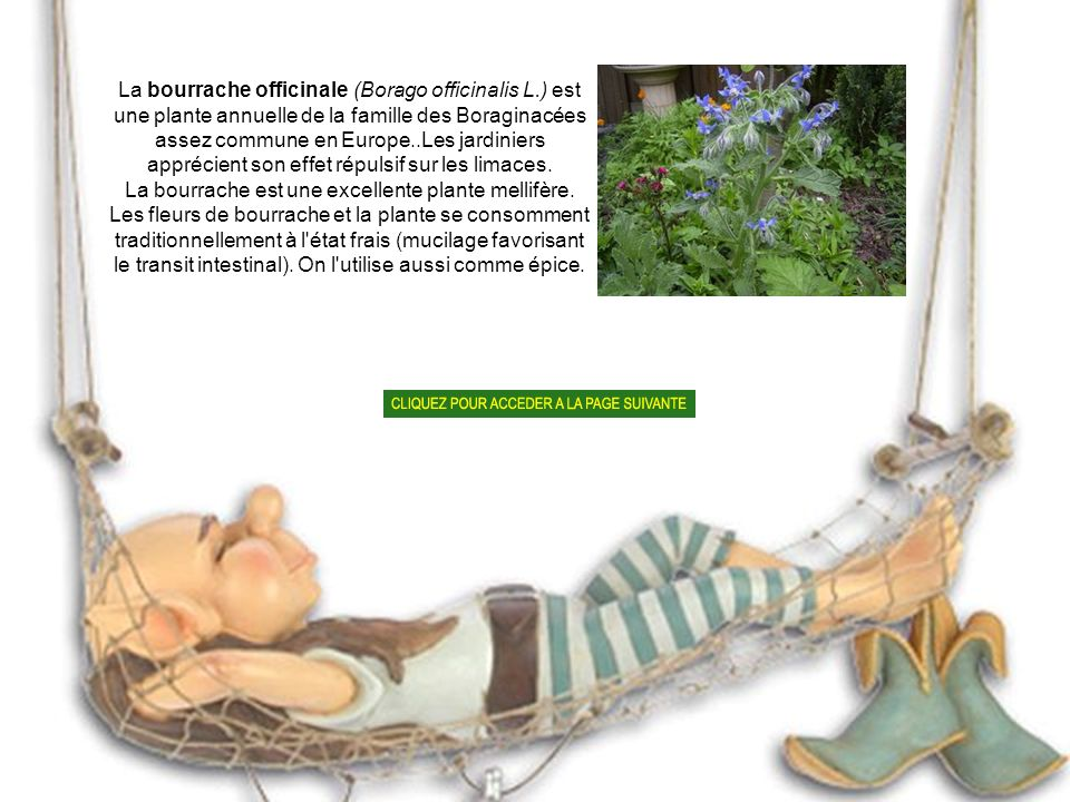 La bourrache est une excellente plante mellifère.