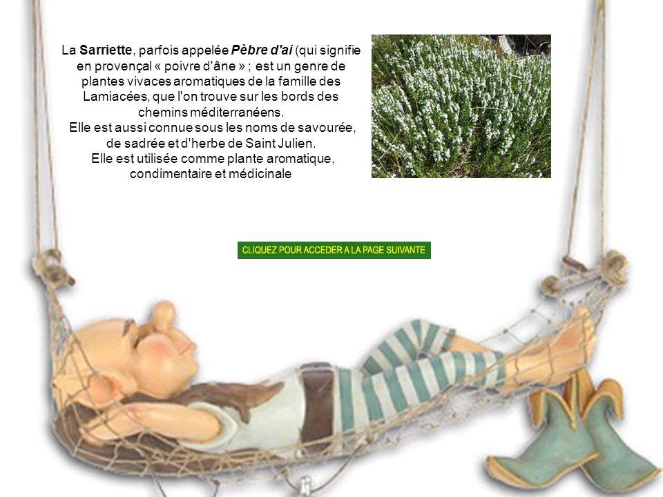 Elle est utilisée comme plante aromatique, condimentaire et médicinale