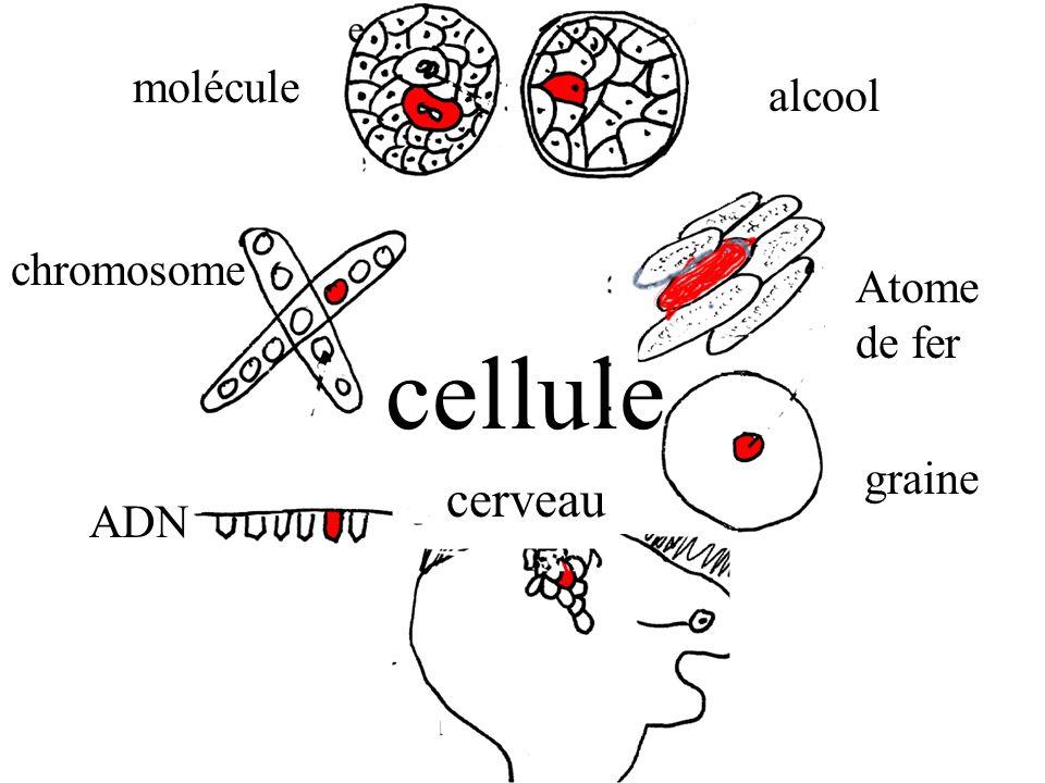 molécule alcool chromosome Atome de fer cellule graine cerveau ADN