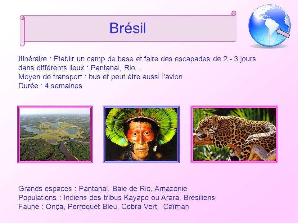Brésil Itinéraire : Établir un camp de base et faire des escapades de 2 - 3 jours dans différents lieux : Pantanal, Rio…