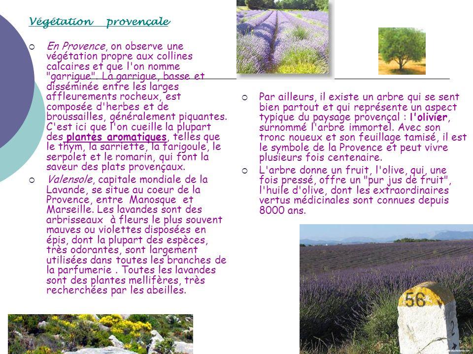 Végétation provençale