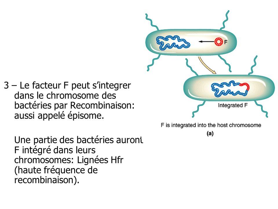 3 – Le facteur F peut s'integrer dans le chromosome des bactéries par Recombinaison: aussi appelé épisome.
