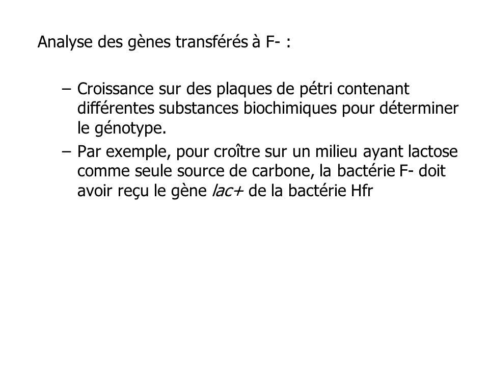 Analyse des gènes transférés à F- :