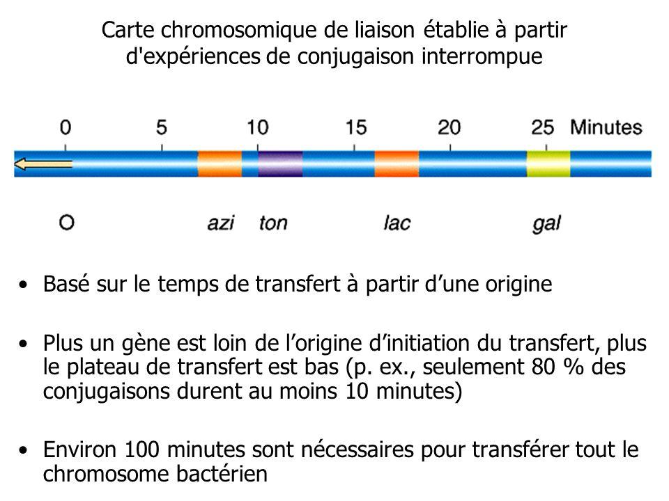 Carte chromosomique de liaison établie à partir d expériences de conjugaison interrompue