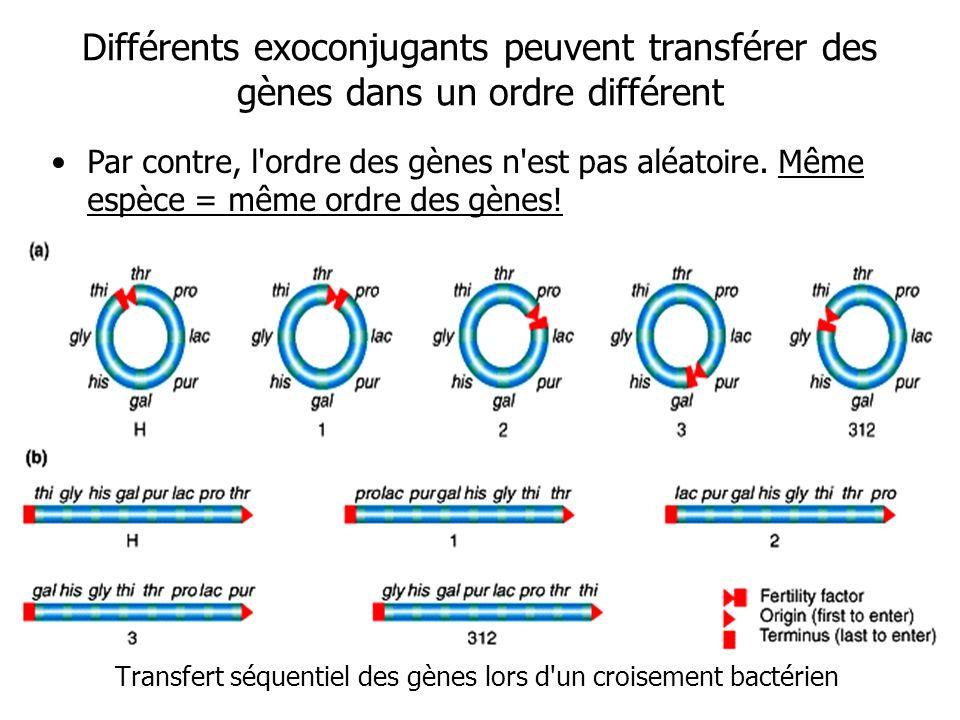 Transfert séquentiel des gènes lors d un croisement bactérien