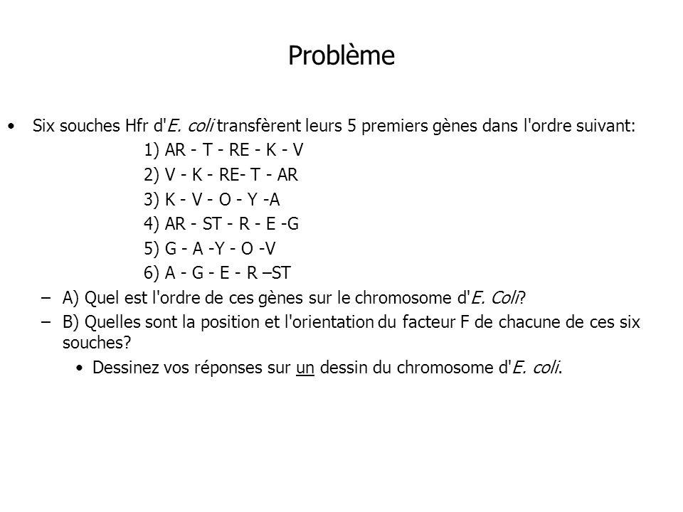 Problème Six souches Hfr d E. coli transfèrent leurs 5 premiers gènes dans l ordre suivant: 1) AR - T - RE - K - V.
