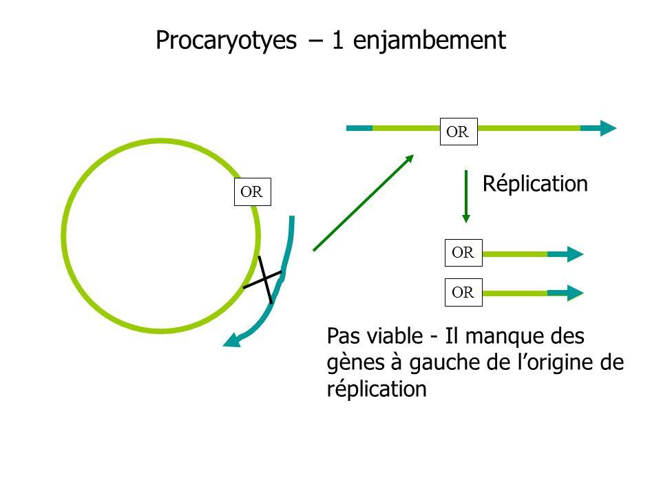Procaryotyes – 1 enjambement