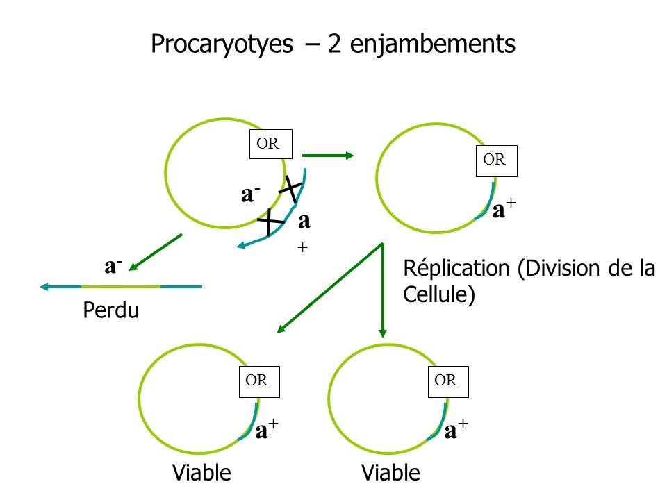 Procaryotyes – 2 enjambements