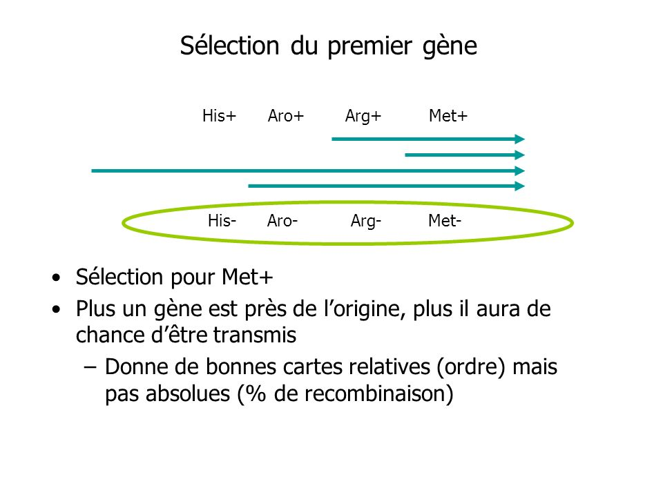 Sélection du premier gène