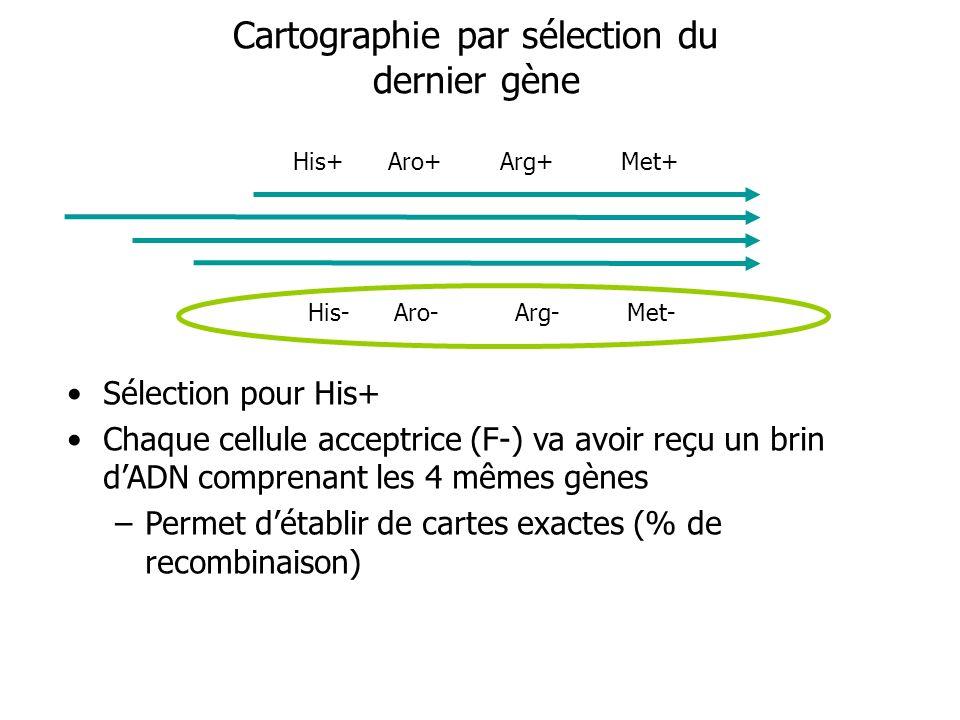 Cartographie par sélection du dernier gène