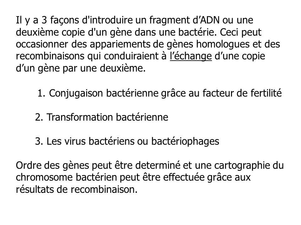 Il y a 3 façons d introduire un fragment d'ADN ou une deuxième copie d un gène dans une bactérie. Ceci peut occasionner des appariements de gènes homologues et des recombinaisons qui conduiraient à l'échange d'une copie d'un gène par une deuxième.