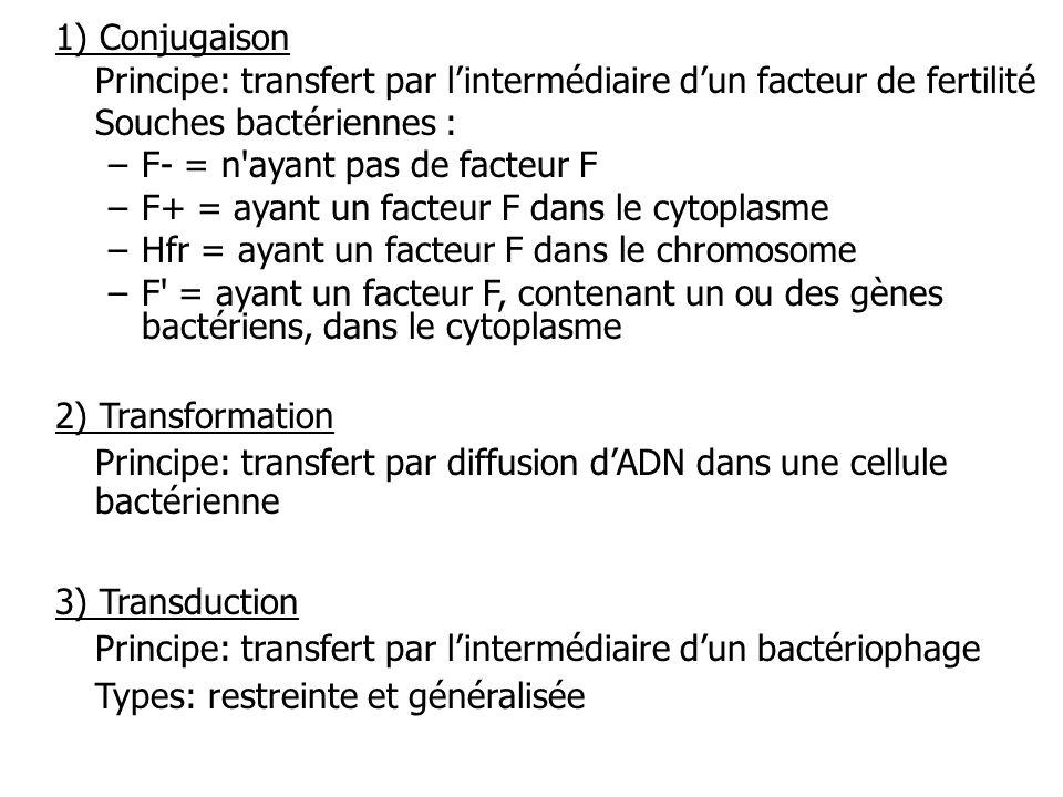 1) Conjugaison Principe: transfert par l'intermédiaire d'un facteur de fertilité. Souches bactériennes :