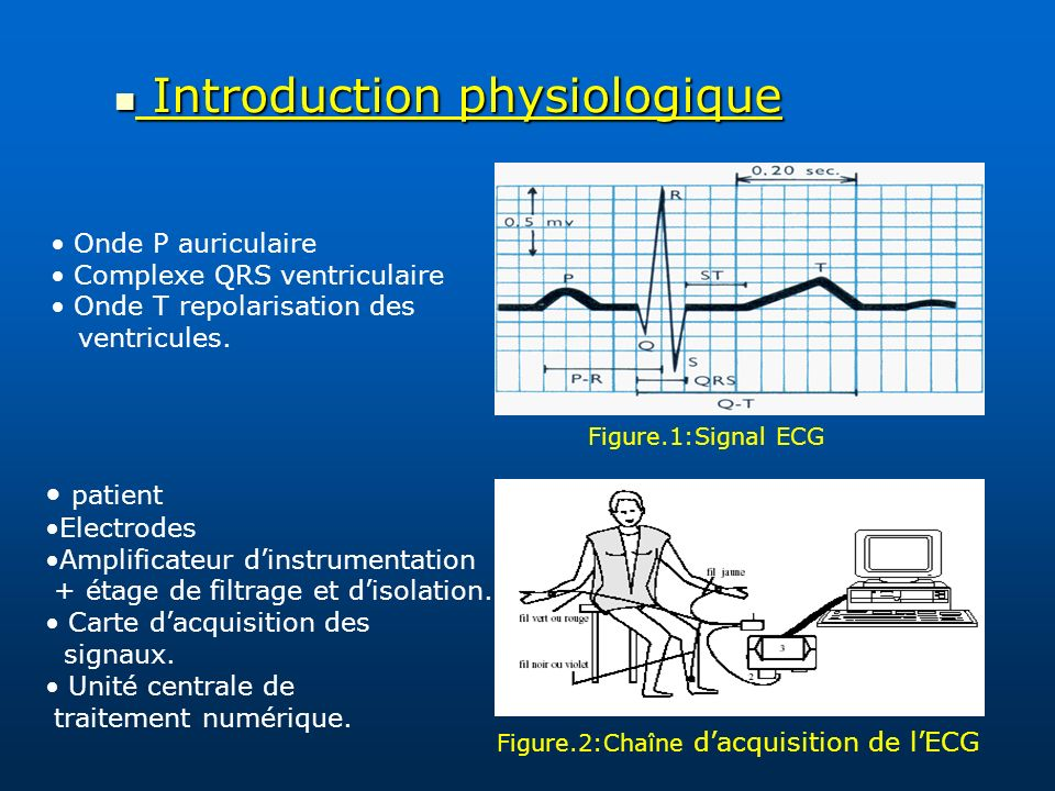 Introduction physiologique