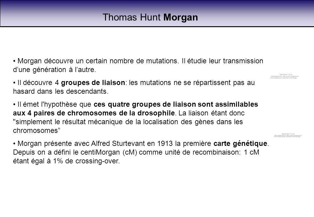 Thomas Hunt Morgan Morgan découvre un certain nombre de mutations. Il étudie leur transmission d'une génération à l'autre.