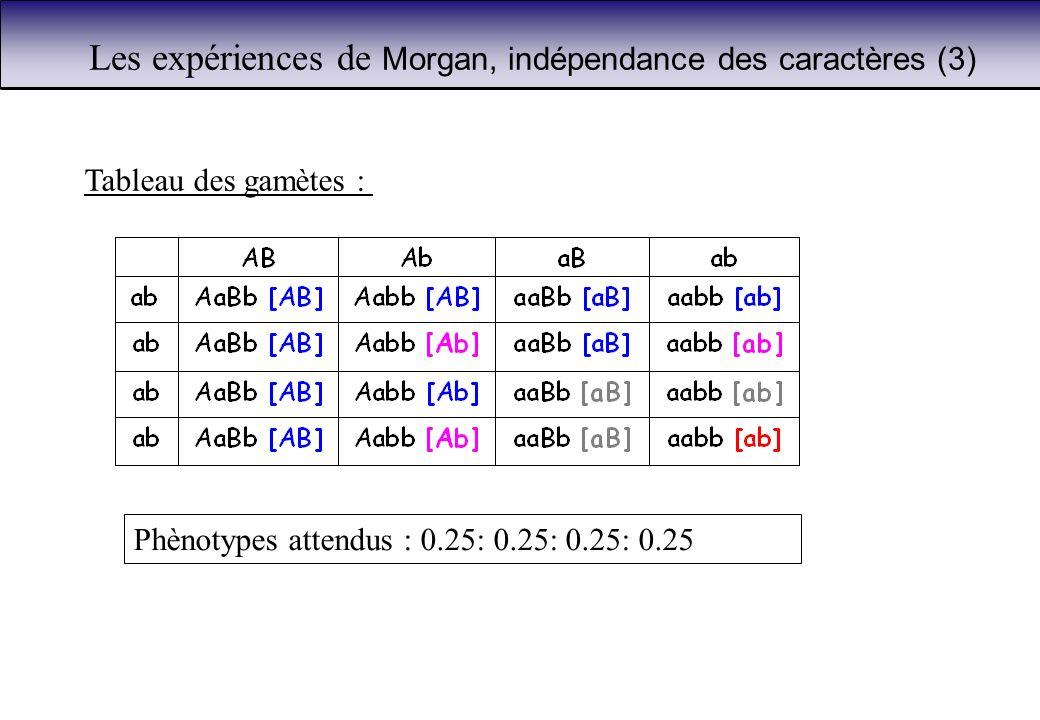 Les expériences de Morgan, indépendance des caractères (3)