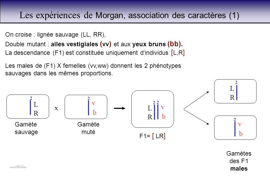 Les expériences de Morgan, association des caractères (1)