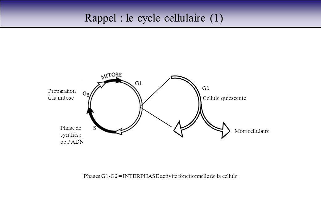 Rappel : le cycle cellulaire (1)