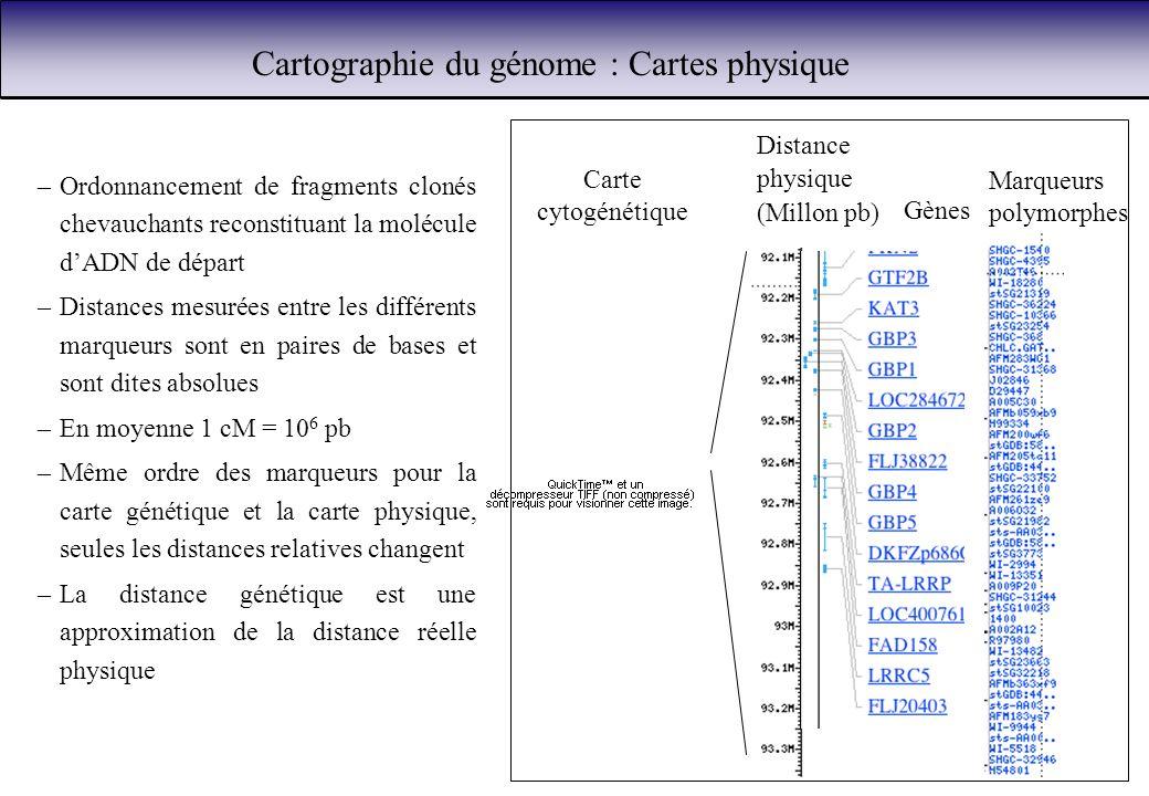 Cartographie du génome : Cartes physique