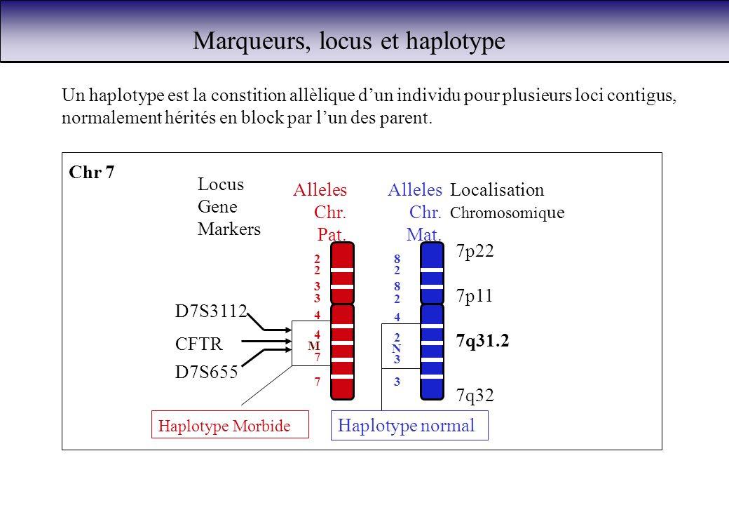 Marqueurs, locus et haplotype