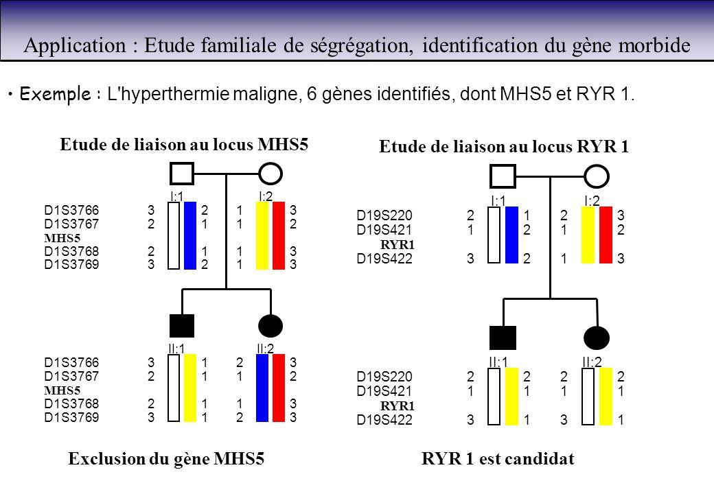 Application : Etude familiale de ségrégation, identification du gène morbide