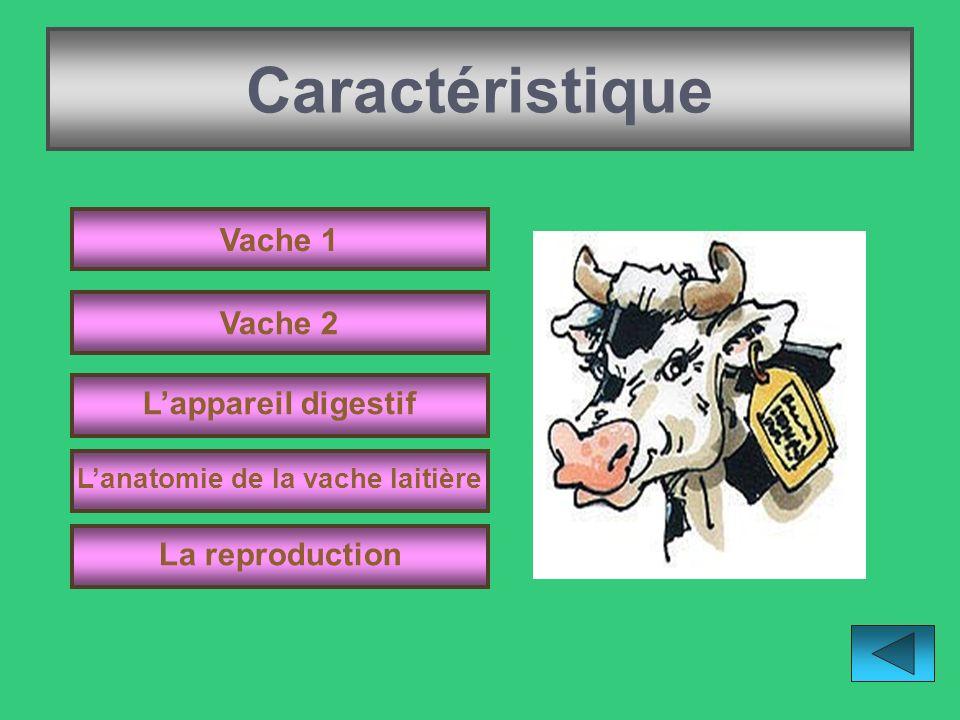 L'anatomie de la vache laitière