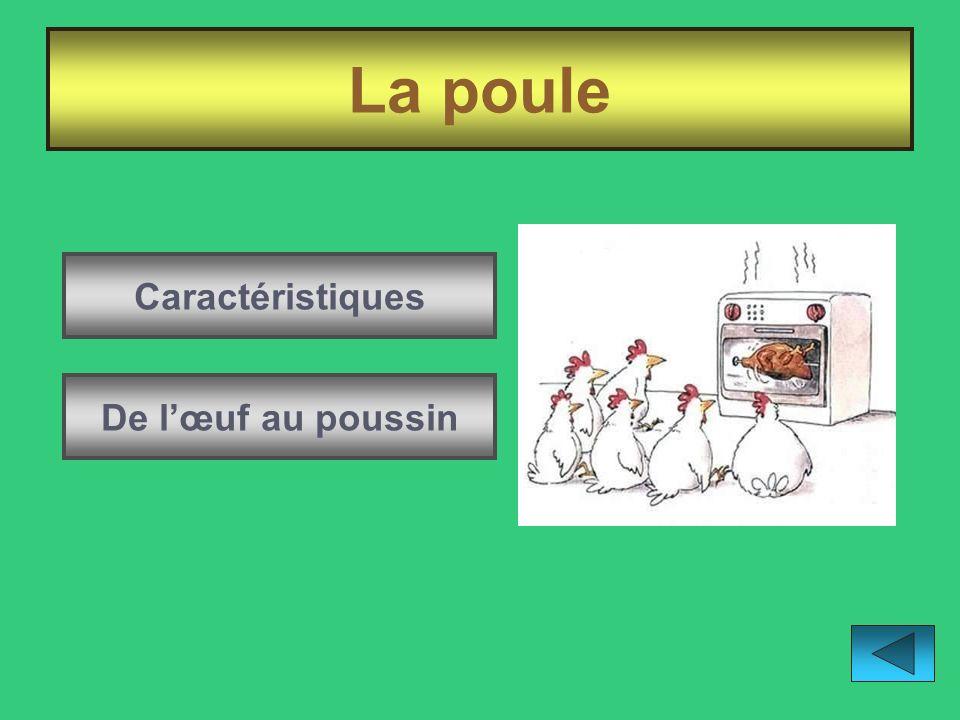 La poule Caractéristiques De l'œuf au poussin